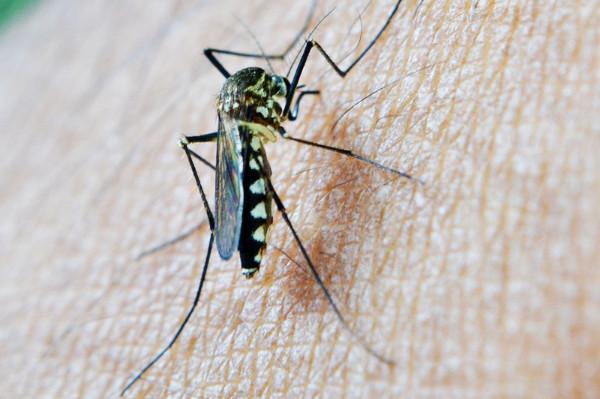 蚊子為什麼喜歡叮咬這種人?原來是因為這個