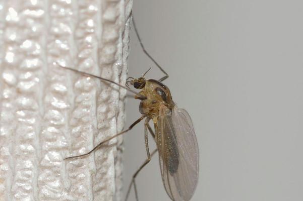 家裡只用一張紙,夏天蚊子全溜走啦!