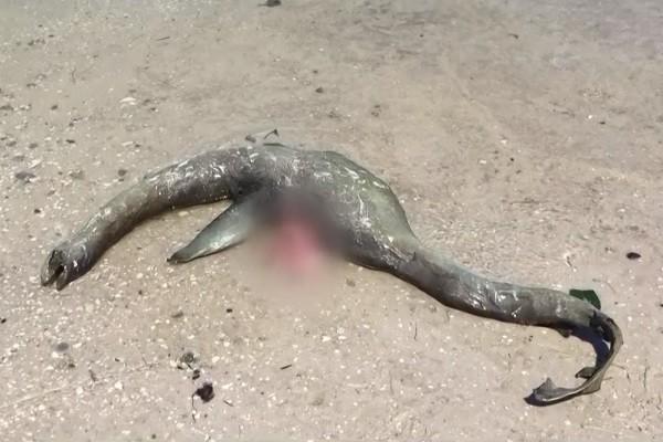 尼斯湖水怪客死他乡?美乔州海滩惊现诡异生物遗体