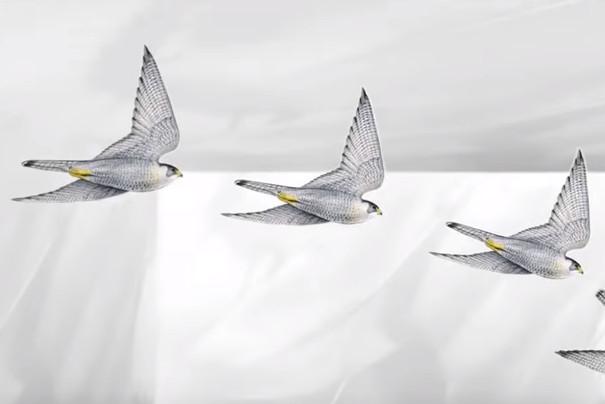 世界上真正最快的动物是什么(视频)