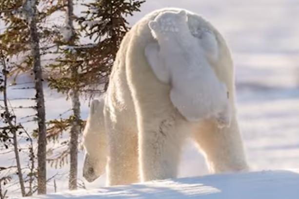 看这些可爱的动物都藏到哪里(视频)