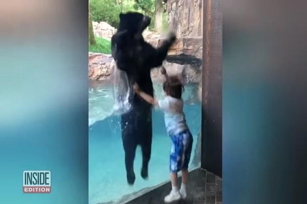 你跳我跟著跳 男童竟吸引黑熊與他隔窗「共舞」