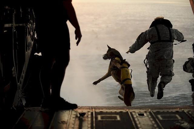 英特勤队遭IS伏击 猛军犬以1敌9 恐怖分子3死
