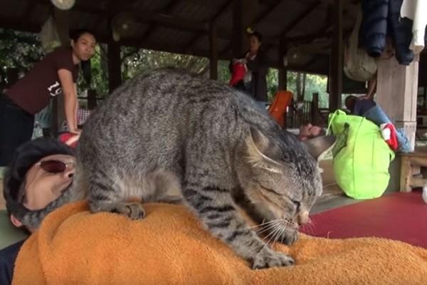"""泰国公园猫师傅""""肉球按摩"""" 网友:好舒服(视频)"""