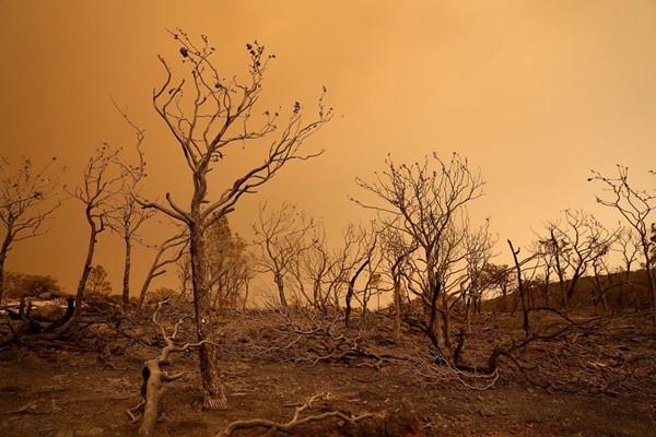 粉尘伤肺 加州14场大火烟尘蔓延20几个州