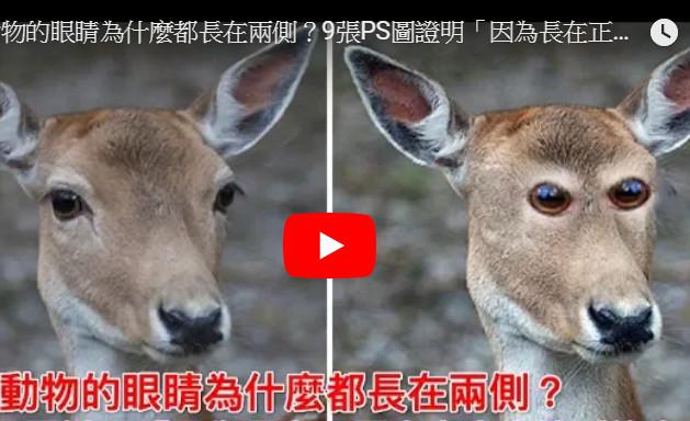 好奇动物的眼睛为什么都长在两侧?如果长在正面会怎样?(视频)