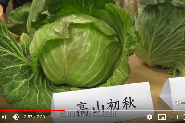 高丽菜从挑选、清洗、保存到切法 一次告诉你(视频)