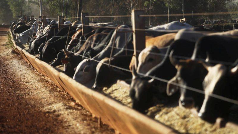 搬石砸脚?中共被迫借道邻国高价进口美肉类豆类