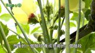 美丽心台湾:生态有机永续 李法宪的理想与抱负