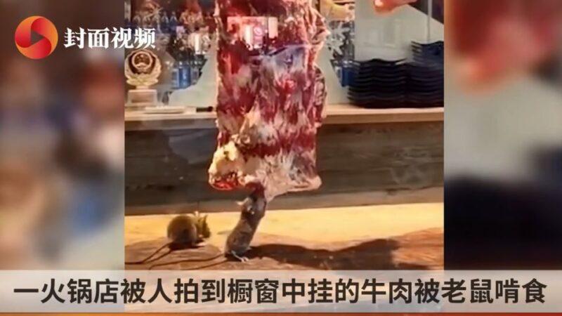 鼠疫正流行 大陆火锅店牛肉被老鼠狂啃