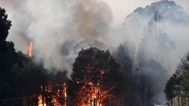 澳洲野火灾情惨重 已酿26人死逾10亿动物死伤