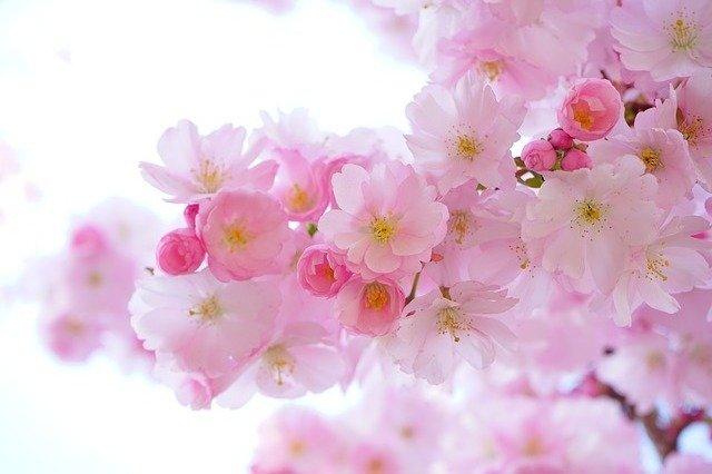 千瑞:春(五律十首)