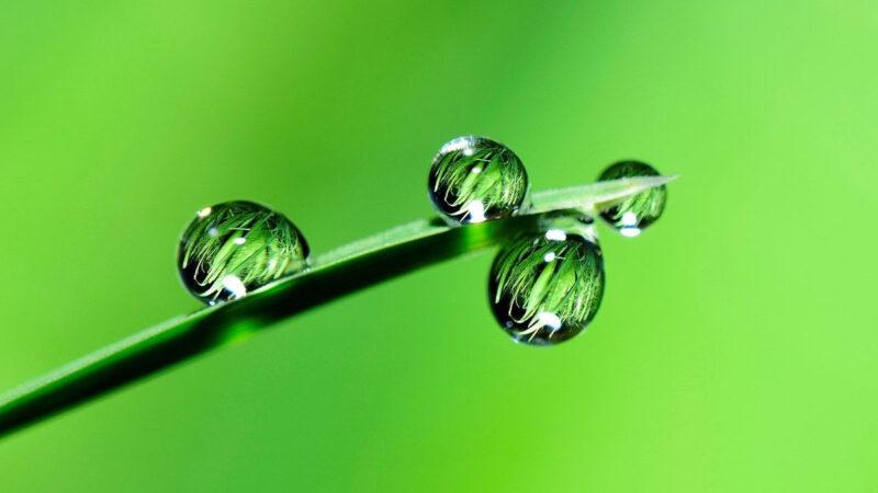 雨水養生吃三樣,喝三茶,記兩早,全年免「三高」