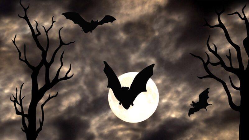 """诡异!大批蝙蝠离奇暴毙 民忧""""末日前兆"""""""