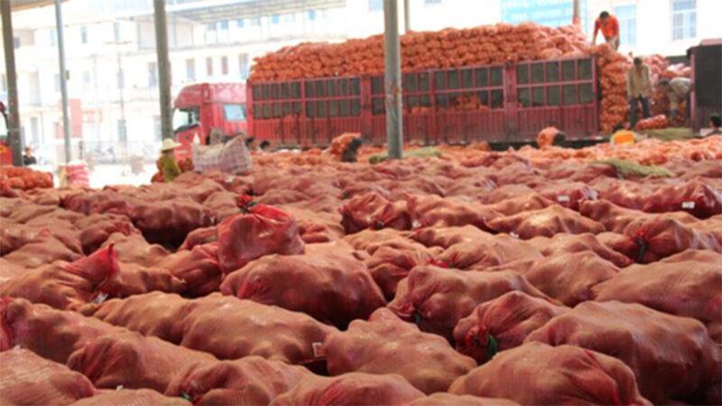 疫情冲击致农产品滞销 中国农民损失惨重