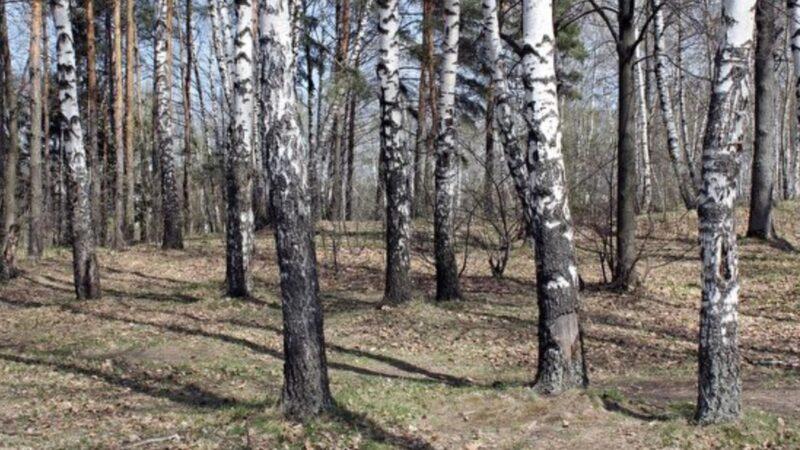 为躲避中共肺炎 俄罗斯一家人住到森林里(组图)