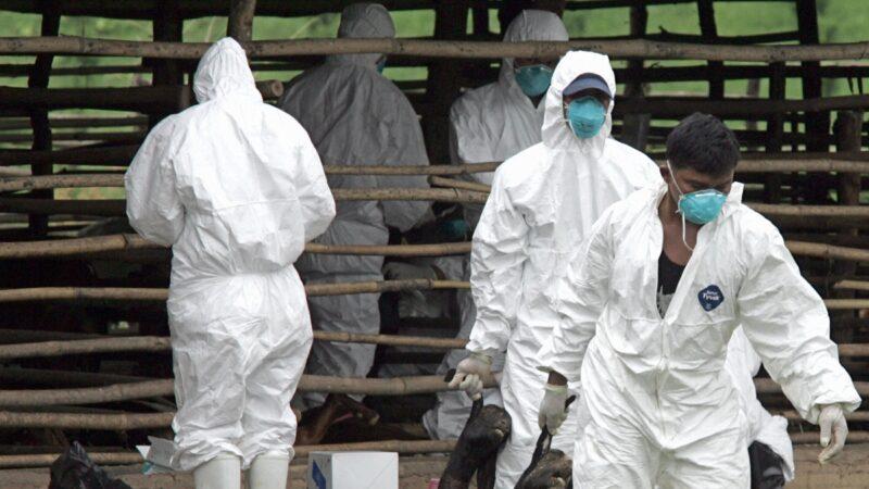 又一致命疫情威胁中国 病死率高达95%