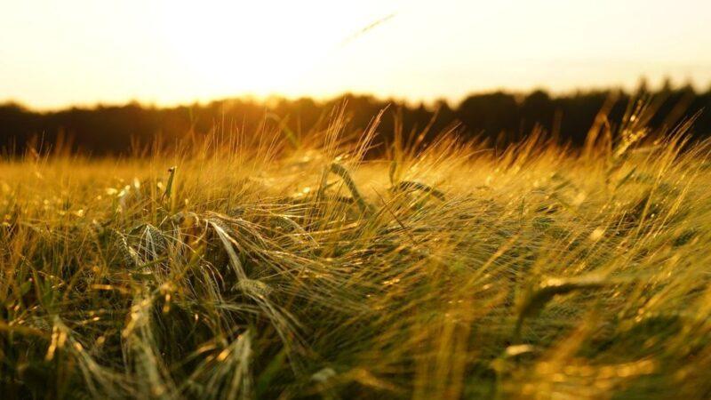 世界糧食計劃署:聖經級大饑荒將至 逾2億人危殆