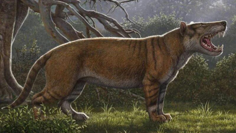 肯尼亞發現一個從未被人知曉的物種:史前巨獅 重1.5噸