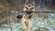 小狗帮盲人移除路障 网民:比人还有同情心(视频)