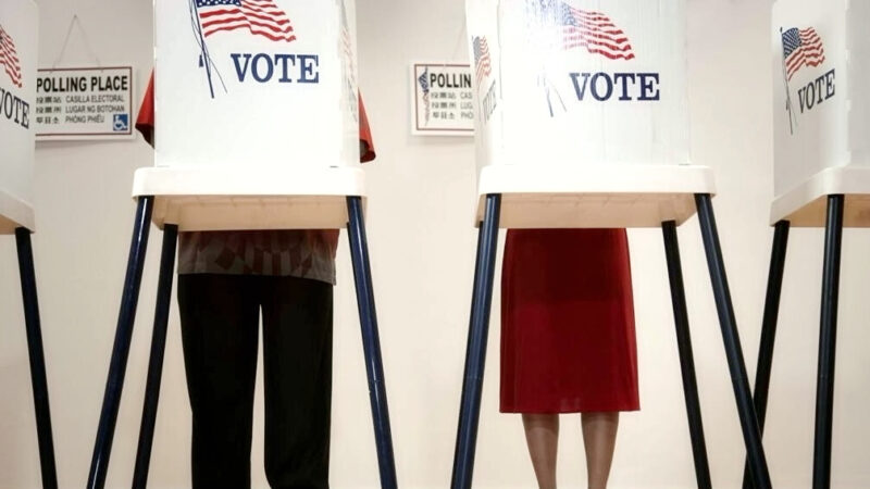 死去愛貓收到選民登記表 亞特蘭大選舉舞弊堪憂