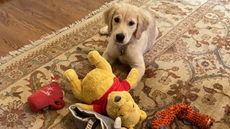 蓬佩奧曬愛犬玩耍小熊維尼 引發聯想