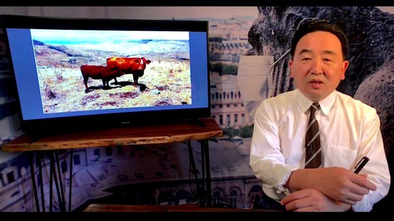 《石濤聚焦》聖經舊約-標誌「聖經末日」的紅母牛出現