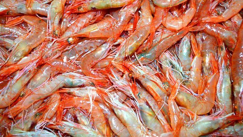 虾头能吃吗?虾皮真的能补钙吗?现在知道还不晚