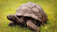 史上最长寿乌龟庆祝188岁生日