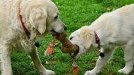 小狗在公園對同伴「說謊」 被主人發現