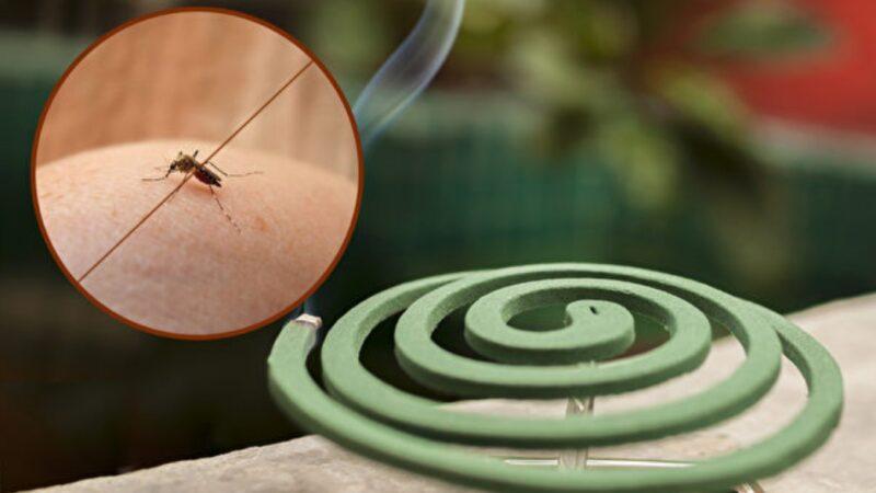 常見4大防蚊物品用對了嗎?這樣用驅蚊最有效