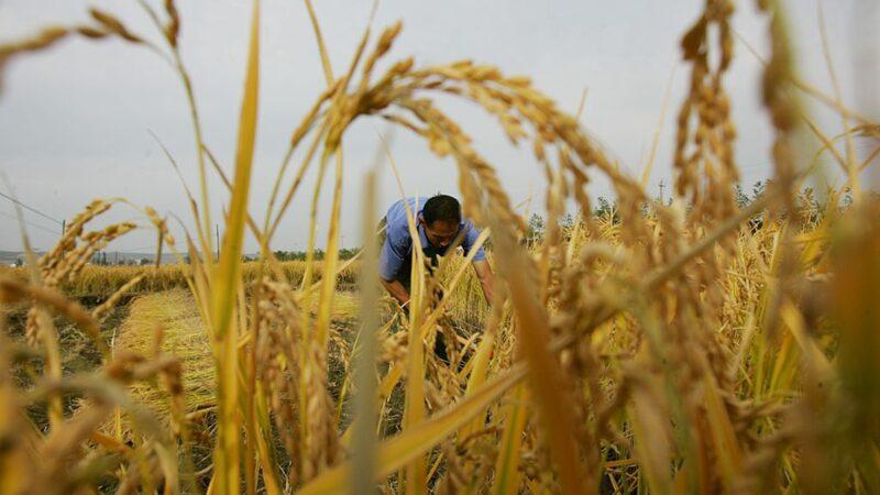 王赫:可疑的2020中国粮食进口激增