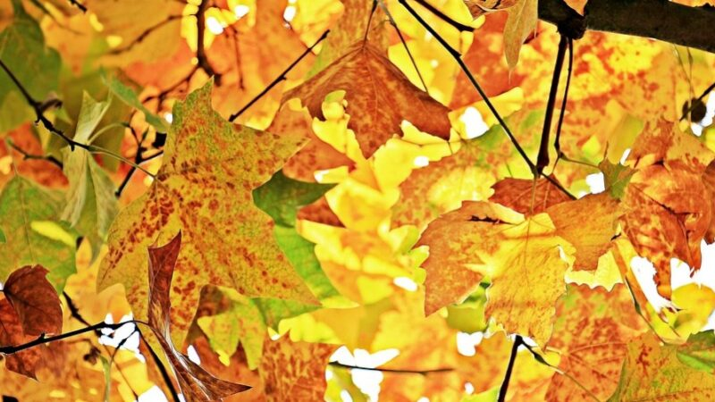 秋分為何是關鍵節氣? 關於秋分你要知道的事