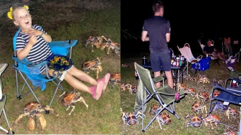 烤肉太香! 澳洲燒烤派對遭「八腳強盗」 突襲