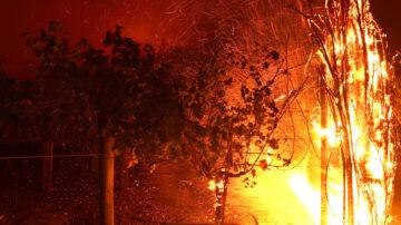 加州再爆新山火 著名葡萄酒庄园付之一炬