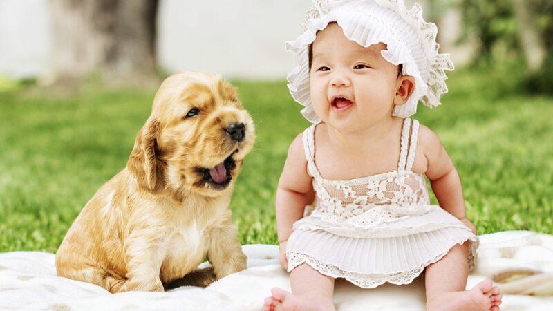 婴儿学爬急坏宠物狗 小狗亲自做示范(视频)