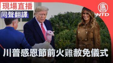 【重播】川普及夫人感恩节前火鸡赦免仪式(同声翻译)