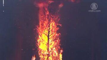 消防局提醒預防家中聖誕樹火災