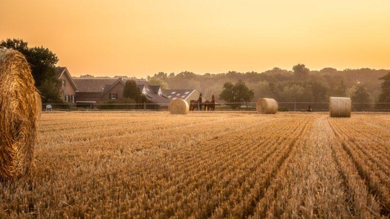 力保「糧食安全」 2020年中國糧食進口激增