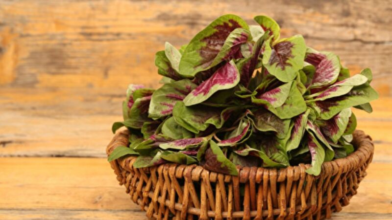 紅莧菜是含鐵蔬菜冠軍 加2類食物 補鐵效果更好