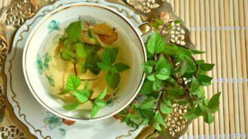 養生茶「喝對」才養生 養生茶應該怎麼喝?