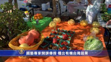 園藝專家開課傳授 種出有機台灣蔬果