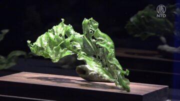 台灣金雕玉琢展休斯頓博物館開幕