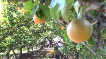 【紐新商訊】常青農場收穫豐碩果實 農場主分享祕訣