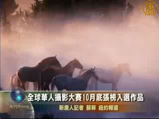 全球華人攝影大賽10月底張榜入選作品