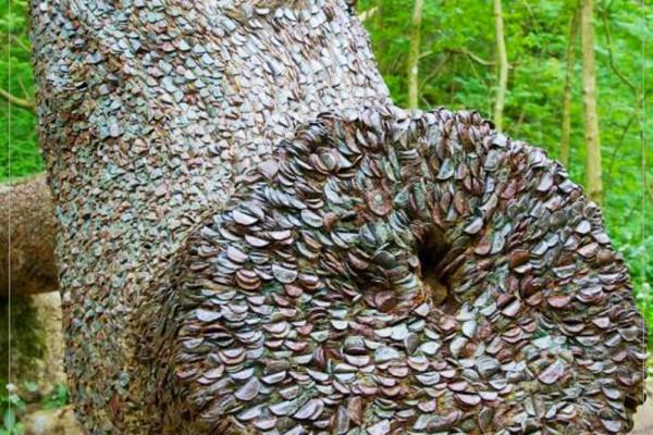 """世界真有""""摇钱树""""原来钱是这样""""长""""出来的"""