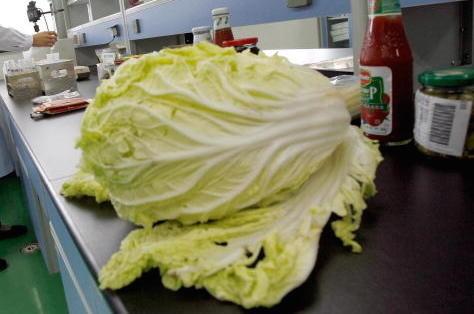 白菜上的这个东西我们都扔了,原来是个宝!