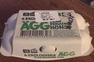 商店買回雞蛋可以孵化小雞嗎?瑞典婦女證明給您看