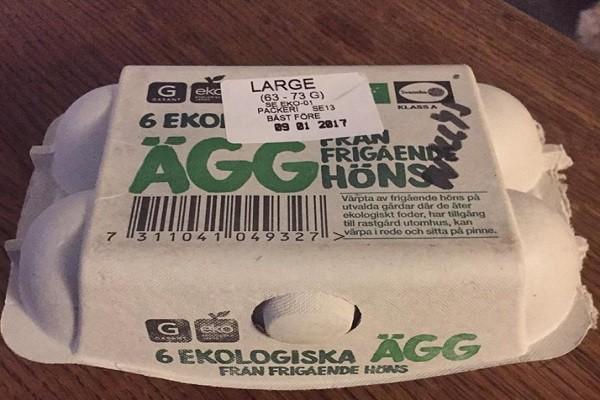 商店买回鸡蛋可以孵化小鸡吗?瑞典妇女证明给您看