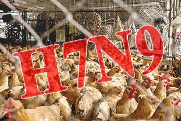 大陸H7N9禽流感頻發 貴州江西各增一例